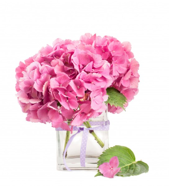 pink-hydrangea-bunch-inside-glass-vase-isolated-white_61792-1219